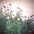Sekuoia_flac_Albumcover
