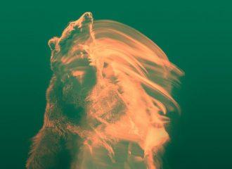 temperance-movement-white-bear-8444